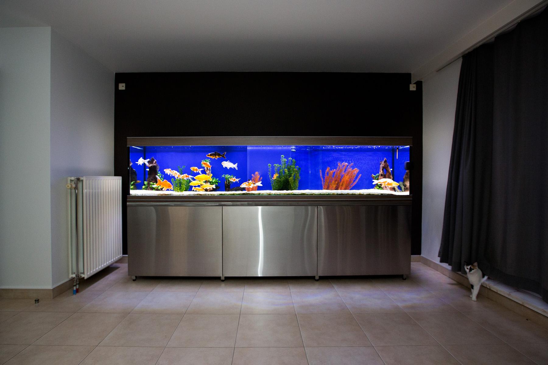 De Dierenvriend  Aquariums op maat gemaakt